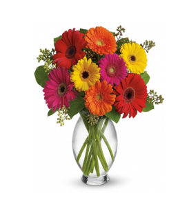 12 Mix Gerberas Bunch | Flower Delivery Near Me | Kalpa Florist, flower delivery near me, flower for delivery near me, flower shop near me delivery, flower delivery near me same day, fresh flower delivery near me, flower delivery near me today, cake and flower delivery near me, flower delivery ludhiana, flower delivery service near me, part time flower delivery jobs near me, sympathy flowers delivery near me, flower delivery near me for today, what can i send instead of flowers for birthday, easter flower delivery near me, wine and flower delivery near me, how to send flowers for a birthday, which stores do free delivery, plant and flower delivery near me, how do i get flowers delivered to someone, flower delivery flower shop near me, how to send flowers same day, order flower delivery near me, where can i buy flowers from near me, best prices for flower delivery, 24 hour flower delivery near me, flower bookey home delivery near me, instant flower delivery near me, how to get flowers delivered to someone, how to gift flowers, valentines flower delivery near me, flower delivery driver jobs near me, peony flower delivery near me, flower delivery near me cheap, local flower delivery near me, flower delivery places near me, what is the cheapest flower delivery service, can i have flowers delivered today, flower delivery near me now, flower delivery jobs near me, flower delivery punjab, how to get flowers delivered same day, flower delivery near me open now, anniversary flower delivery near me, flower bouquet online delivery near me, flower home delivery near me, flower plant delivery near me, can you get flowers delivered same day, quick flower delivery near me, chocolate and flower delivery near me, rose flower delivery near me, where can i order flowers for delivery, flower gift delivery near me, best local flower delivery, flower bouquet home delivery near me, flower arrangements delivery near me, exotic flower delivery near me, what to send instead of flowers for bi