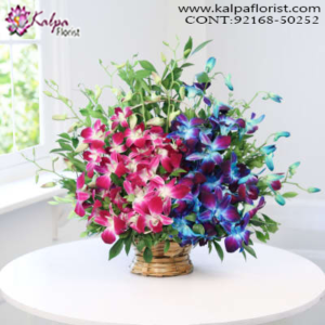 Send Flowers Online In Delhi, Order Online Flowers, Same Day Flowers Delivery, Online Flowers Delivery, Flower Delivery Online, Order Flowers Online India, Buy/Send Flowers, Online Flower Delivery India, Best Flower Delivery in India, Send Flowers Online Mumbai, Send Flowers Online Bangalore, Send Flowers Online Pune, Online Flower Delivery in Delhi, Flower Bouquet Online Delivery, Online Flowers Delivery in Hyderabad, Kalpa Florist